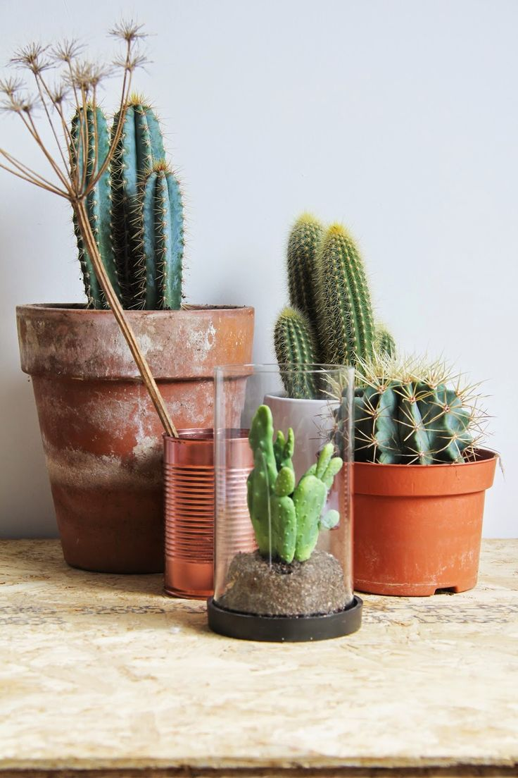 What a fun random assortment of pottery for these cacti!
