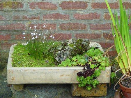 Alpine Garden Plants and Sink Gardens