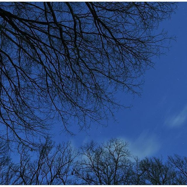【moto.yoshida】さんのInstagramをピンしています。 《夜... 漆黒の闇が森を包み込む時間  冬枯れの木々だけがザワザワと動き出す  #森  #真夜中  #漆黒の闇  #冬枯れの木  #ザワザワ  #奈良県橿原市  #万葉の森  #写真好きな人と繋がりたい  #写真撮ってる人と繋がりたい  #ファインダー越しの私の世界  #夜  #冬の夜空》