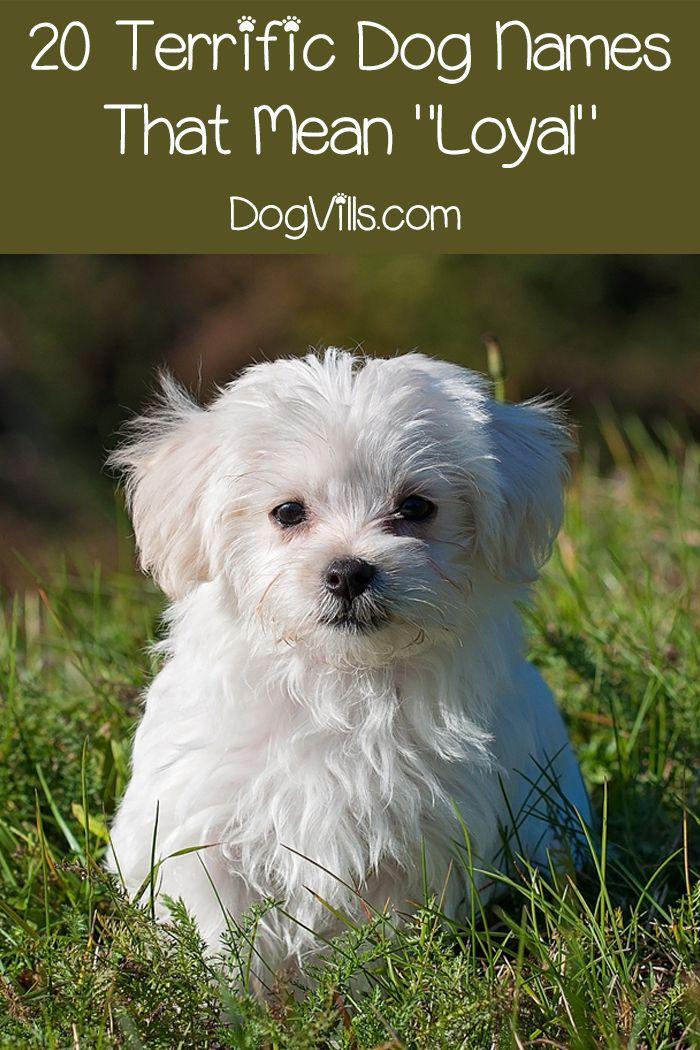 59 Fantastic Dog Names That Mean Loyal Dog Names Dog Wallpaper