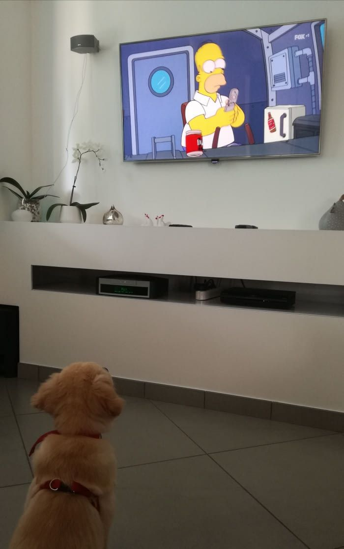 She enjoys so much watching Simpsons