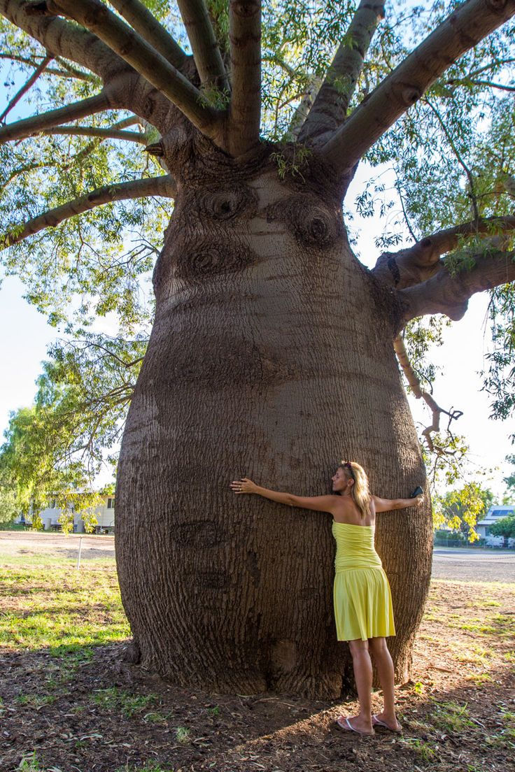 Look at the size of this bottle tree we found in Roma, Outback Queensland. See more pics and tips in this blog post on one of our fave regions in Australia.