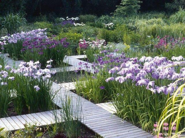 Various Varieties Of Japanese Iris Iris Ensata Ina