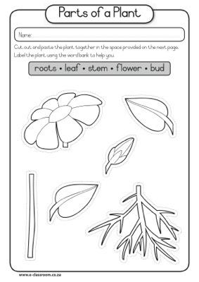 Of Part Seed Plant Diagram   CAPS-Grade1-Lifeskills-Term3-Plants-Seeds-Parts of a Plant