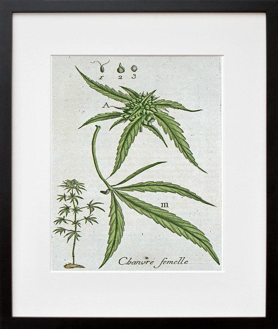 Marijuana Art Botanical Print Hemp Leaf by Blivingstons on Etsy, $8.99