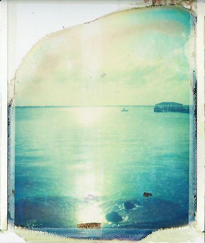 polaroid film is old by sam knapp