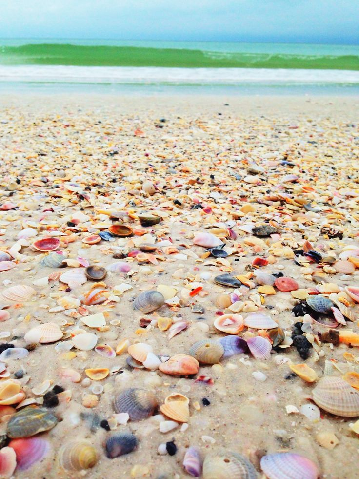 Anna Maria Island is perfect for shelling!