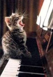 Singing: Cats, Music, Animals, Singing, Funny, Kittens, Things, Kitty