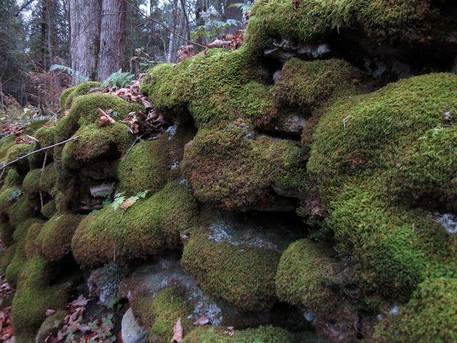 mossy limestone rocks, Niagara Escarpment, Ontario