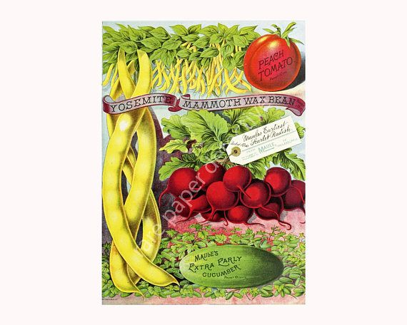 Vegetable Garden Seed Catalog Print, 5 x 7, Vintage 1896 Greenhouse