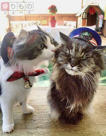 猫駅長「ばす」引退、後任は「らぶ」に 会津鉄道・芦ノ牧温泉駅 | 乗りものニュース