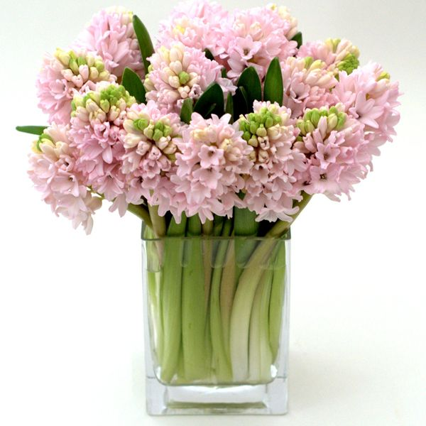 Hyacinthus : uber feminine to match your dress, and would pair nicely with baby's breath for boutonnieres and bouquets