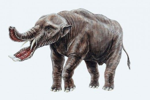 Prehistoric Elephants -- click thru to see more | Science ...