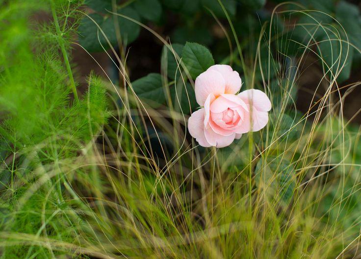 Positively Stoke Garden by Bartholomew Landscaping at 2014 RHS Chelsea Flower Show www.bartholomewlandscaping.com