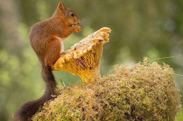 Il capture le monde intimiste et merveilleux des écureuils depuis sa fenêtre | Buzzly