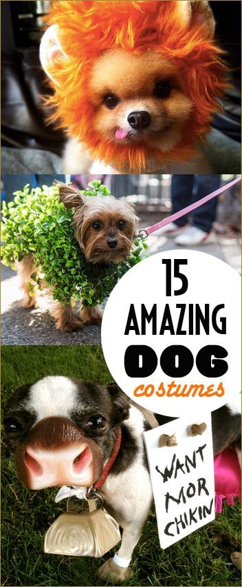 15 Amazing Dog Costumes.  DIY pet costumes.  Hillarious Halloween dog costumes.