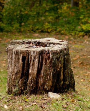 They just took down an old oak tree. But, what can they do with the tree stump? Our readers share how to reduce the cost of removing a tree stump.