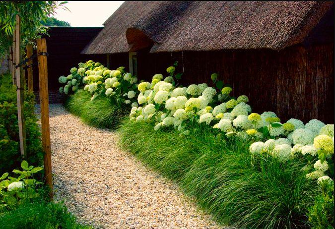 pea gravel + ornamental grass + Annabelle Hydrangea...is the grass Prairie…