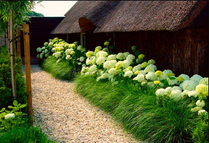 pea gravel + ornamental grass + Annabelle Hydrangea...is the grass Prairie Dropseed?