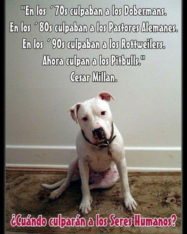 La culpa siempre es del otro...  #Difunde en #LealesOrg una #adopción y #adopta o sé #acogida para #AdoptaNoCompres O un #SeBusca de #perro o #gatos; #perdido o #encontrado para #NoAlMaltratoAnimal  https://www.instagram.com/p/Bf1sIAuhCJb/ https://scontent.cdninstagram.com/vp/b980d900343e24352e01f870b30b9316/5B2F24CD/t51.2885-15/sh0.08/e35/p640x640/28155497_208964193040495_2888728246612918272_n.jpg