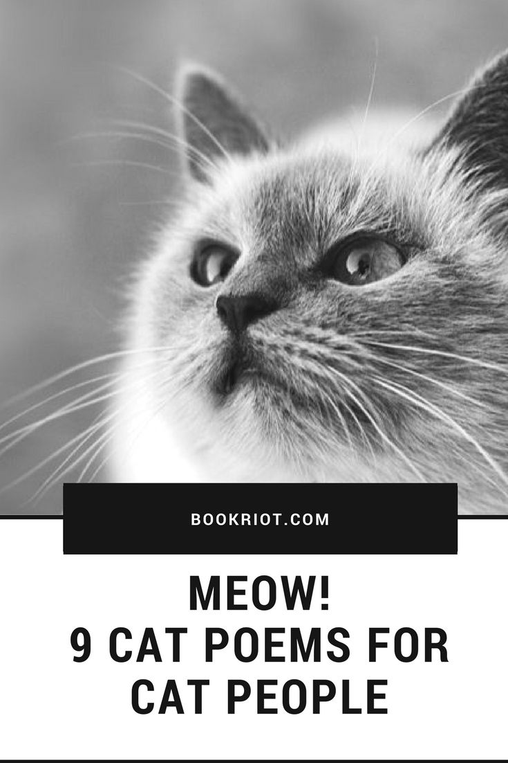 9 great cat poems for cat people