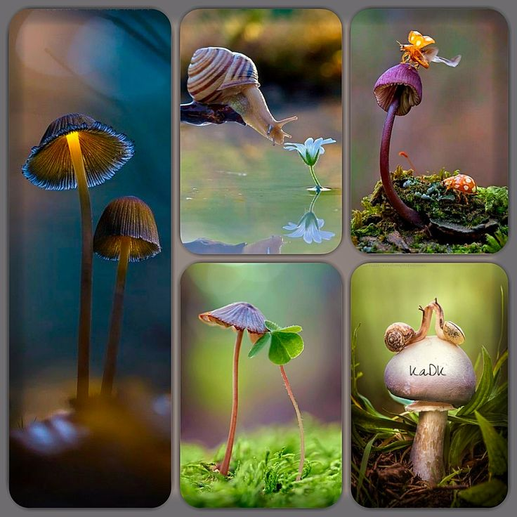 Nature - Collage made by KaDK's World - https://www.pinterest.com/k5606/kadks-world-of-collages-and-moodboards/