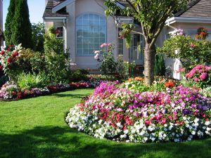 Petunie für ihre eigene Gartenschau