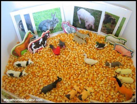 """Farm sensory bin with popcorn kernels ("""",)"""