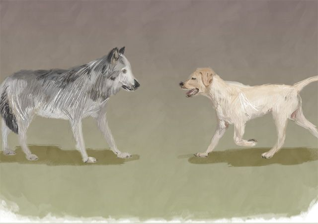 Although scientists are still trying to determine exactly when dogs and humans began their age-old relationship, many believe it started around 15,000 years ago.