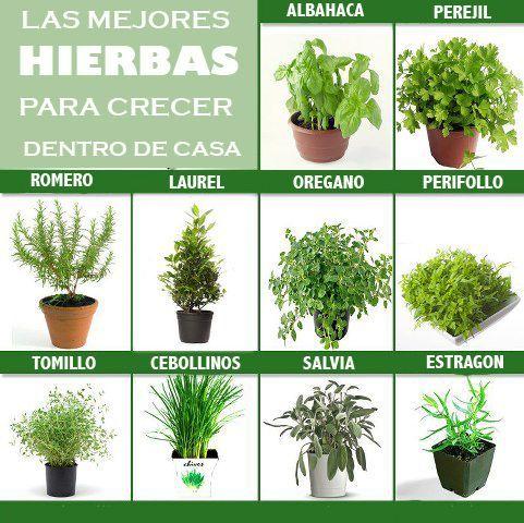 FRAN HUERTO nos muestra las mejores hierbas para cultivar en casa y las diversas opciones que tenemos para aprovecharlas.