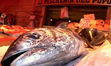 The 5 Best Reasons to Never Ever Eat Factory-Farmed Fish