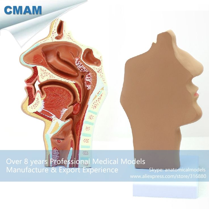 62.59$  Buy here - http://ali6t8.shopchina.info/go.php?t=32809798399 - CMAM-THROAT04-2 Human E.N.T. System Diseased Nasal Cavity Anatomy Model,  Medical Science Educational Teaching Anatomical Models  #aliexpress