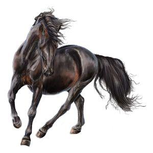 The Last One, Pferd Marwari Rappe #13883991 - Howrse