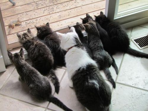 Chipmunk TV!: Sliding Glasses Doors, The Doors, Squirrels, The Zoo, Chipmunks, Cat Ladies, Kittens, Tvs, Animal