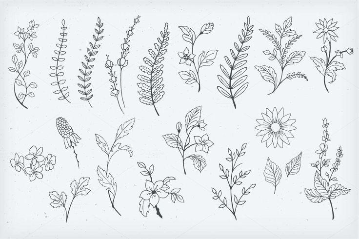 Botanical Decorative Elements By Solana On Creativemarket