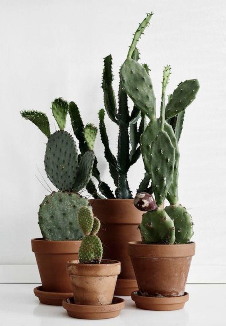 die 50 besten bilder zu kakteen auf pinterest g rtnern sukkulenten und zimmerpflanzen. Black Bedroom Furniture Sets. Home Design Ideas