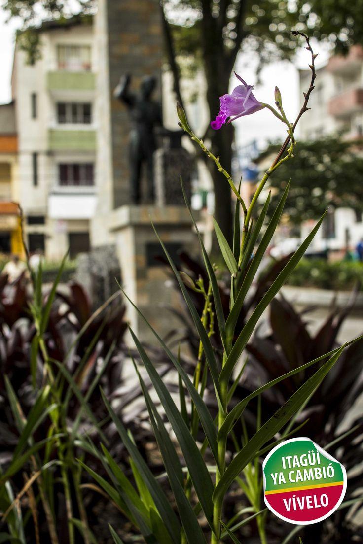 Embellecimiento del entorno Parque Obrero de Itagüí