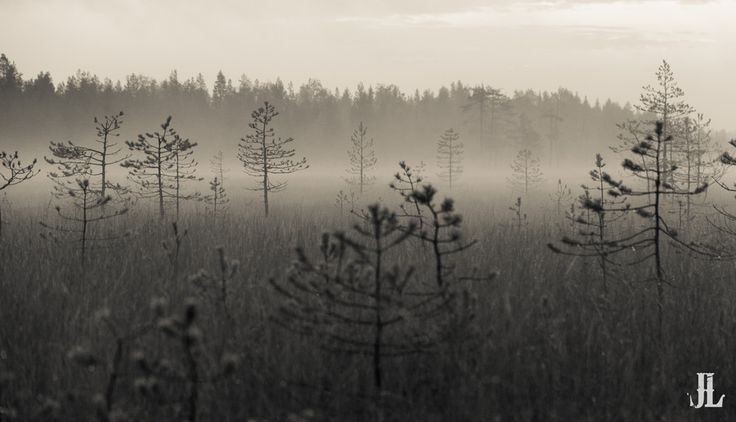 Morning Haze vol. 2
