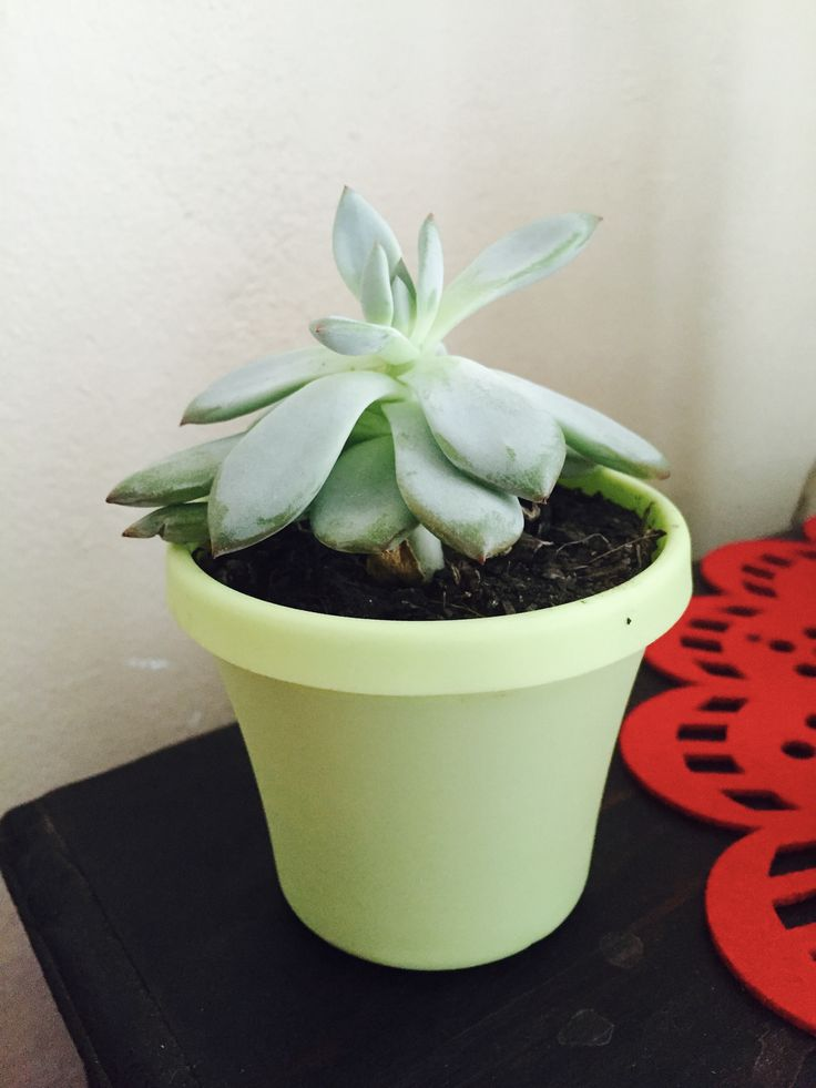 I love plants, especially succulents. They bring life to my bedroom