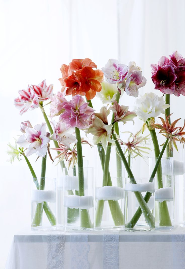 Bunte Farben mit der Amaryllis im Winter.  #amaryllis #blumen #flowers #blumenstrauss #deko #wohnen #living  #inspiration