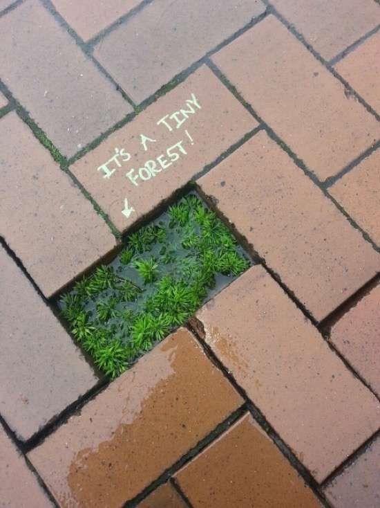 Esta pequenina floresta sinalizada por alguém muito gentil.