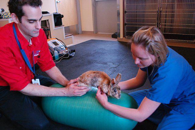 Eharmony dating a veterinarian