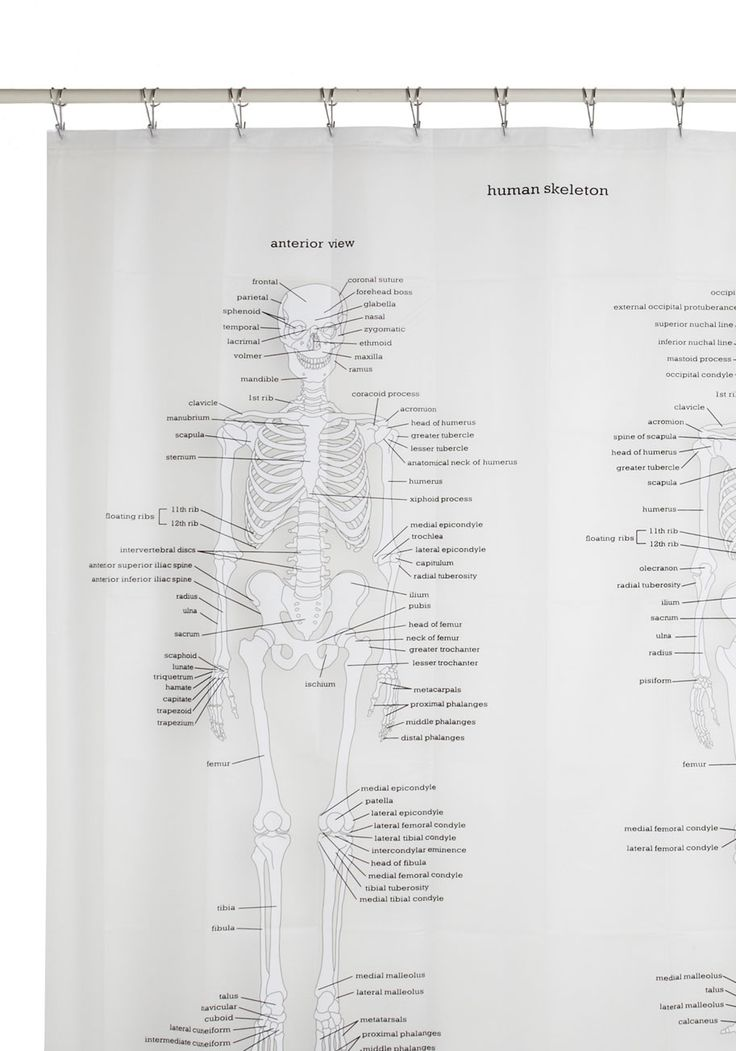 Learn, Rinse, Repeat Shower Curtain. The key to memorization is repetition, and this printed shower curtain helps you to learn the human skeleton while lathering up! #white #modcloth