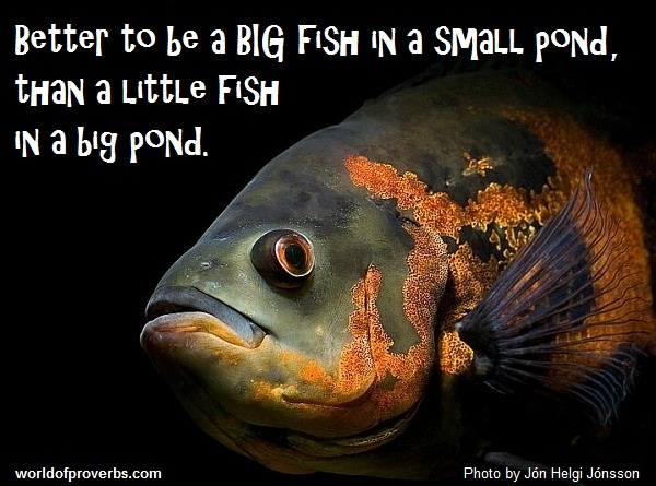 17 best images about humorous quotes on pinterest blame for Big fish little pond