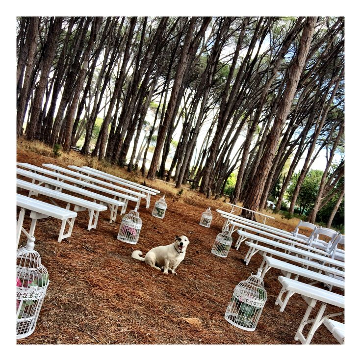 #ForestWeddings Ceremony with white benches  #WineryRoadForest