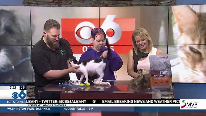 Stray cat adoption clinic Saturday James is FIV positive, so will need a little extra care and to be kept in a stress-free environment. You can meet these cats and others needing a home at Pet Supply Plus in Glenville Saturday from 11am to 2pm.