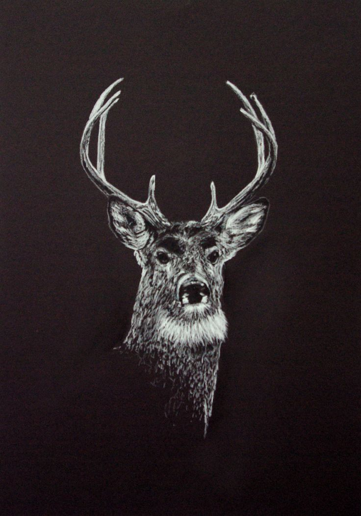 Red Deer. White charcoal on black paper. By Fiona Ansink