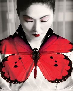 e c c o * e c o: 'Beautiful Soul' Channels Madame Butterfly