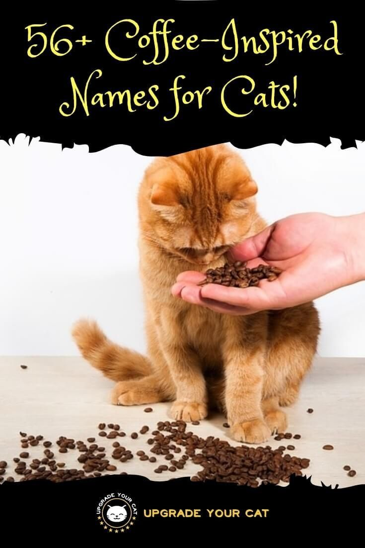 56 Aromatic Coffee Names For Cats Upgrade Your Cat Coffee Names Kitten Names Girl Girl Dog Names