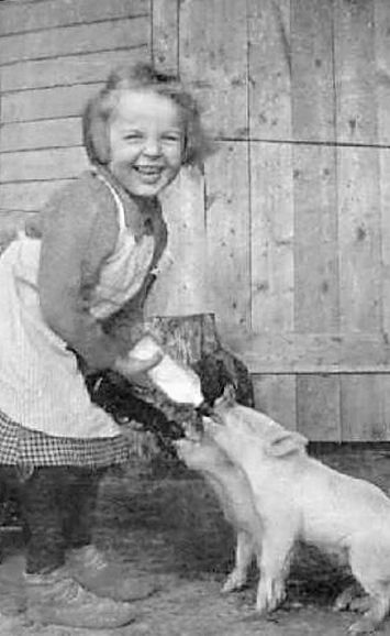 +~+~ Vintage Photograph ~+~+  Happy girl feeding the baby piglets!